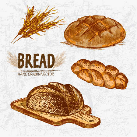 Digital color vector detailed line art golden braided and round rye bread on wooden chopping board, wheat hand drawn set. Thin outline. Vintage ink flat, engraved mill doodle sketches. Isolated Illustration