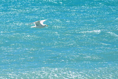 Daylight view to seagull flying over azur sea in Cannes, France. Negative copy space, place for text.