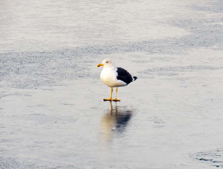 a seagull sitting on ice at seafront in winter