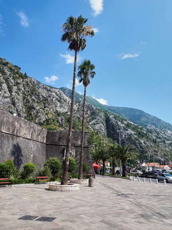 Square with high palms and benches, rocky hills on the background in Kotor, Montenegro