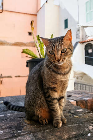 A cat sitting on a stone wall with buildings on the background in Sanremo, Italy