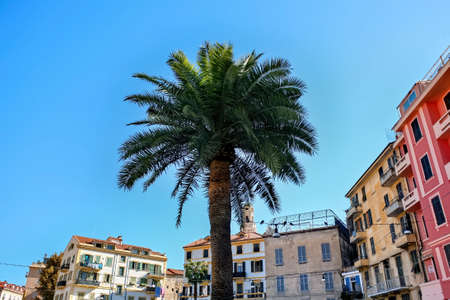 Palm with aged and modern buildings on the background in Sanremo, Italy