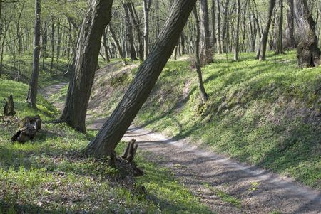 Path in gully in hornbeam forest (Kyiv, Ukraine, Holosiyivsky forest) Stock Photo