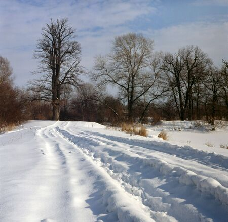Country road in winter on Zhukiv island in Dnipro floodplain, Kiev (Ukraine)