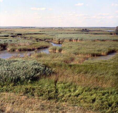 Floodplain of the Sula river. Poltava region, Ukraine.