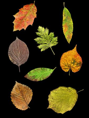 Leaves of 8 species of trees and shrubs in autumn isolated on black background