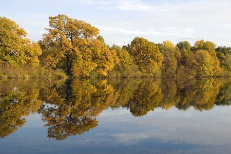 floodplain: Trees and their reflection in water (floodplain of the Dnieper)