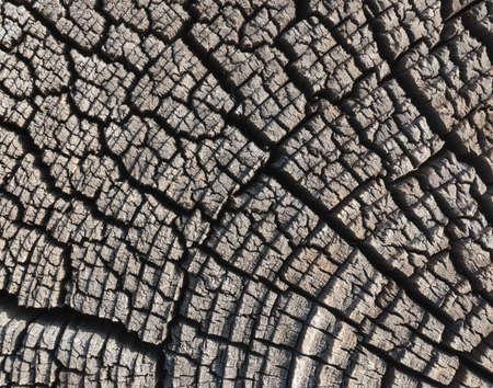 fissures: Stump texture