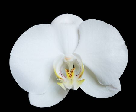 Flower of Phalaenopsis isolated on black