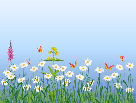 Meadow flowers and butterflies
