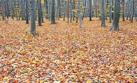 Wood in November Stock Photo