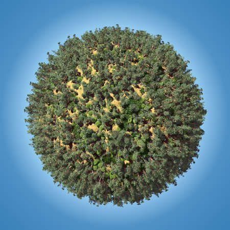 Small planet with coniferous forest
