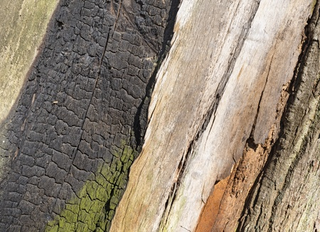 Surface of injured tree trunk