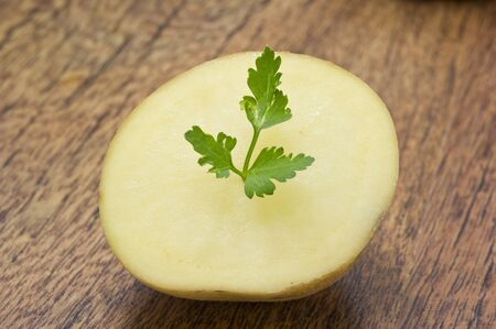 potato and parsley leaves on wooden table photo