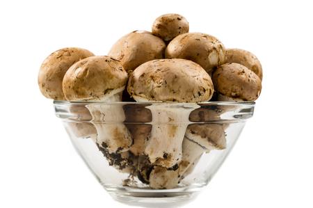 agaricus: common mushrooms on white background