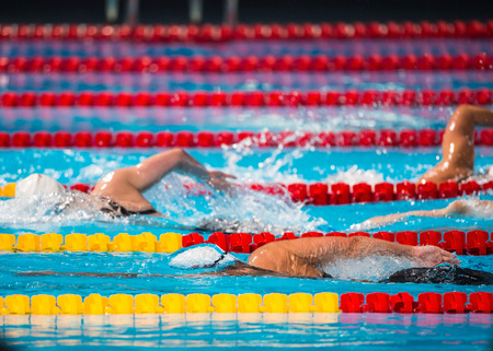 Frestyle swimming race in swimming pool
