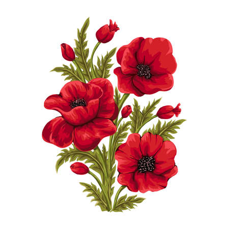 Bouquet of red poppies hand drawn illustration.