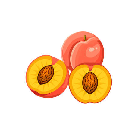 juicy peach whole and half  isolated on white background. Vector illustration. Healthy food design. ingredients for cooking. 版權商用圖片 - 102154174