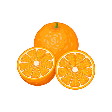 Three Orange fruits whole and slices isolated on white background. Vector illustration. Healthy food design. ingredients for cooking.