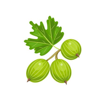 Vector gooseberry isolated on white background.    Ilustração