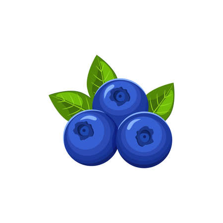Vector blueberries with leaves isolated on white background.
