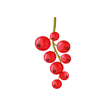 Vector red currant isolated on white background.    Ilustração