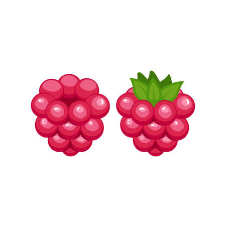 Vector ripe raspberry isolated on white background.