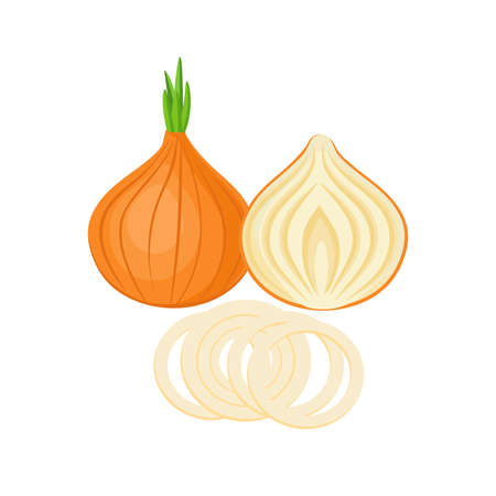 onion whole and slices isolated on white background. Vector illustration. ingredients for cooking. Ilustração