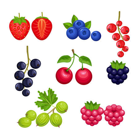 Set of fresh berries  isolated on white background. Strawberry, blueberry, currant, cherry, raspberry, BlackBerry, gooseberry. Vector colorful icons.