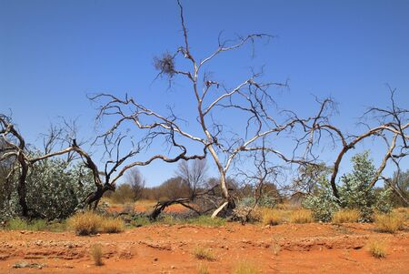 the outback: Australia, dead tree in outback Stock Photo