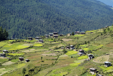 bhutan: Bhutan, rural area in Haa valley