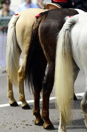 braided: Italy, horses with braided tails by festival in South Tirol