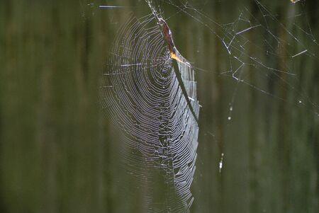 spider net: Zoology Spider Net