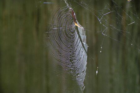 Zoology Spider Net