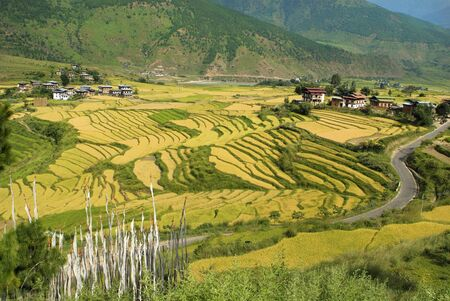 rural area: Bhutan, prayer flags in rural area and village in Punakha