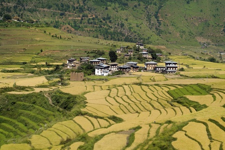 rural area: Bhutan, rural area and village in Punakha Stock Photo