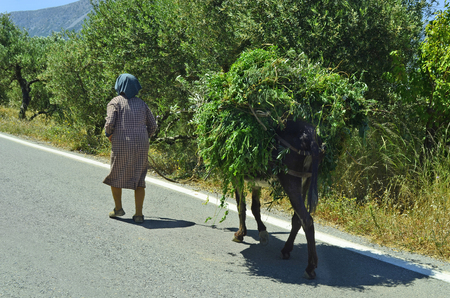 laden: Unidentified old woman on road with her donkey fully laden with greens Stock Photo