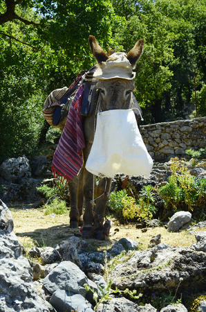 mode transport: Greece, Crete, donkey with hut, feed bag and saddle - mode of transport for tourists to Zeus cave