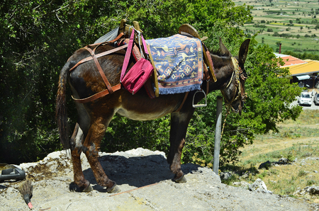 mode transport: Greece, Crete, donkey with equestrian saddle - mode of transport for tourists to Zeus cave Stock Photo