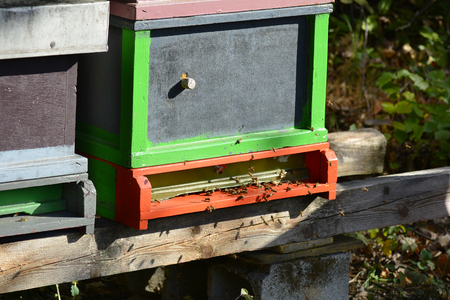 apiculture: Austria, beehives for apiculture