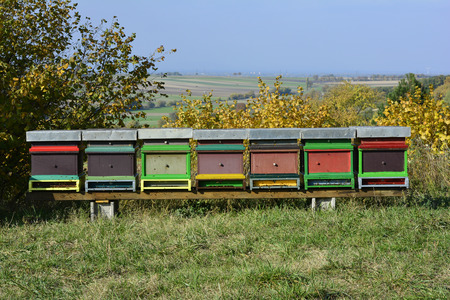apiculture: beehives in field