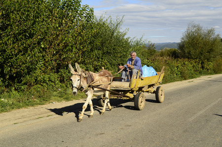 mode transport: Blatska, Bulgaria - October 2nd, 2013: Unidentified peasant carry freight on his donkey cart, a usual mode of transport in rural areas