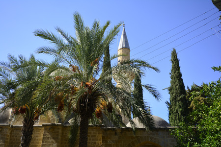 minaret: Cyprus, palm trees in front of a mosque with minaret