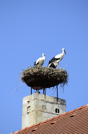 austrian village: white stork in bird nest on roof in the Austrian village of Rust