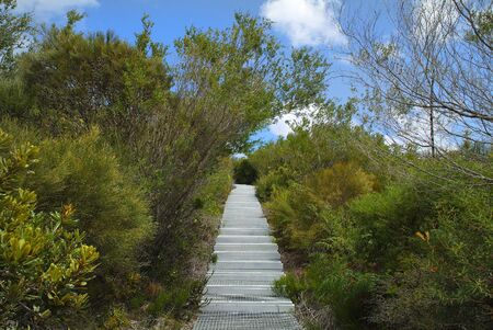 manly: Australia, way with iron steps through Sydney Harbour Nationalpark on North Head in Manly