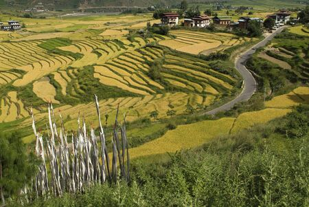 bhutan: Bhutan, village and rice cultivation in Punakha Stock Photo