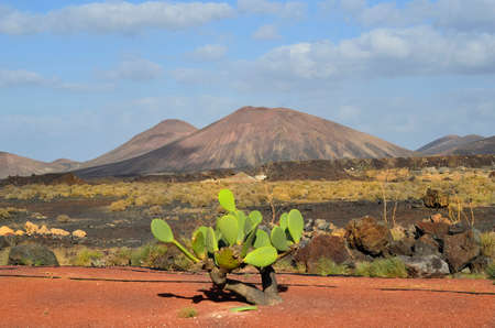 lanzarote: Spain, landscape around Yaiza on Lanzarote