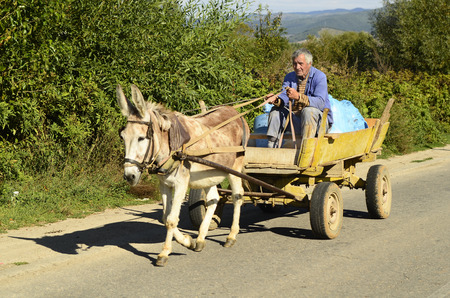 Blatzka, Bulgaria, unidentified peasant on donkey cart, a typical vehicle in rural areas in Bulgaria
