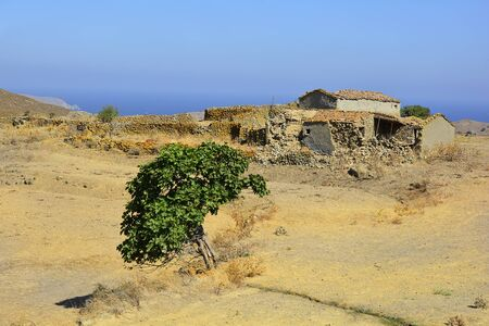 farmstead: Greece, ratty farmstead and fig tree on Lemnos island