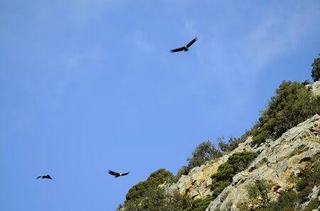crete: Greece, Crete, vultures